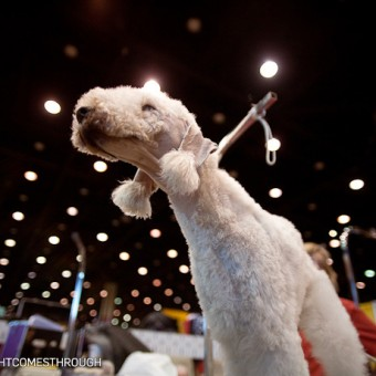 International Kennel Club Dog Show